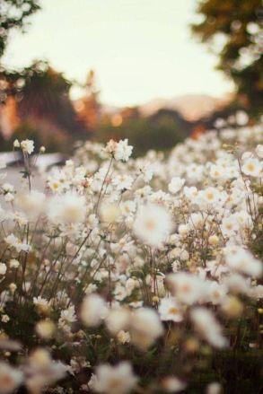 Dandelions Spring